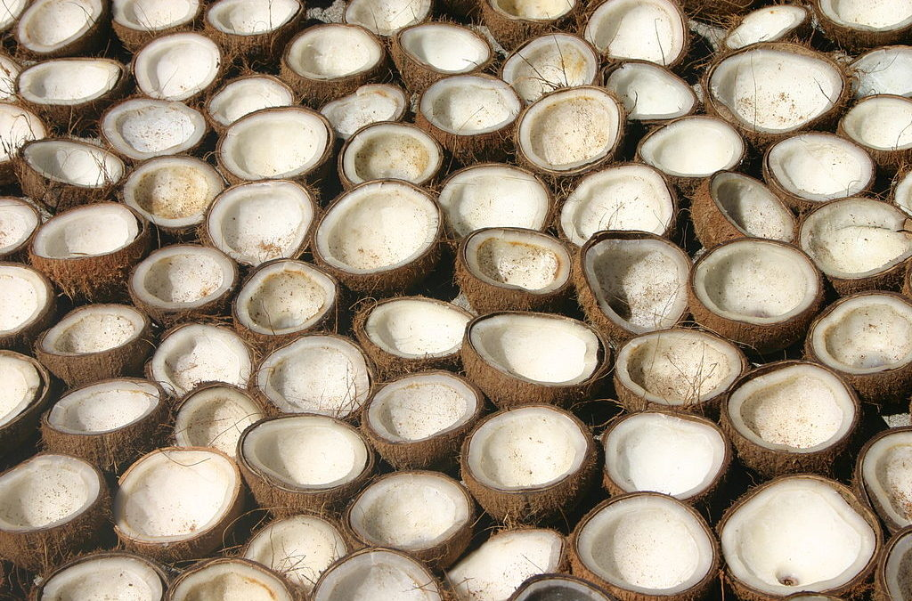 What is Fractionated Coconut Oil?